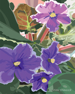 susan spangler, fine art prints, illustration, botanical